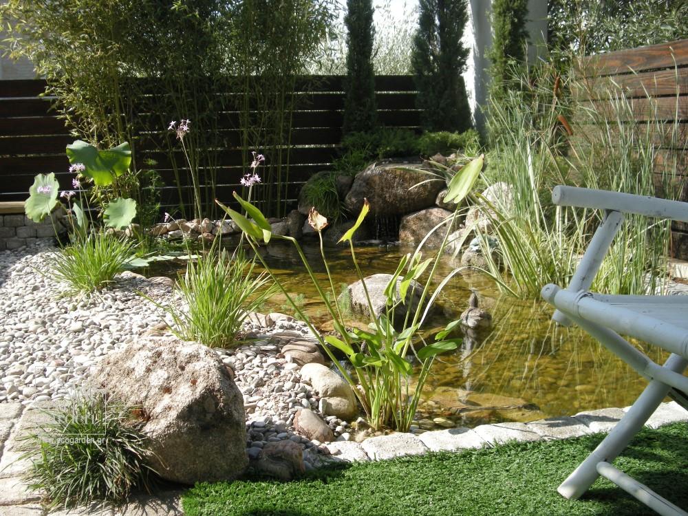 Εμπλουτίσαμε το μικρό οικοσύστημα της λίμνης με υδρόβια φυτά